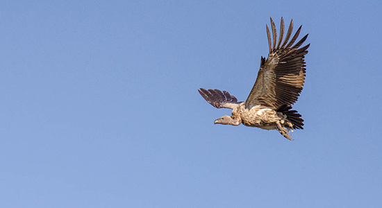 Giant's Castle Game Reserve Vulture Hide Bookings Contact Far & Wild Safaris